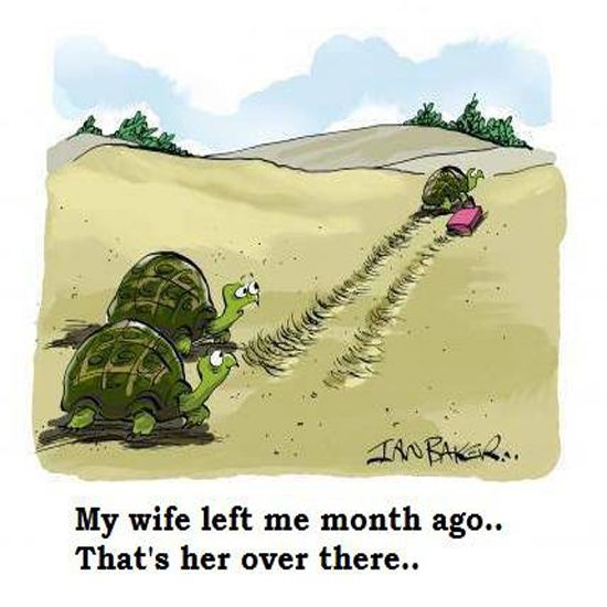 4.bp.blogspot.com___funny-tortoise-marriage-breakup.jpg